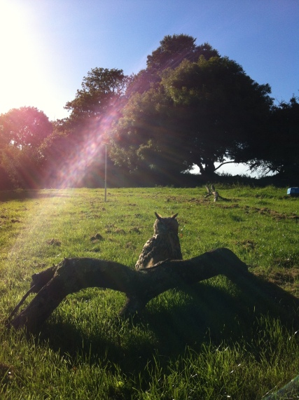 BB and Peanut enjoying the sun
