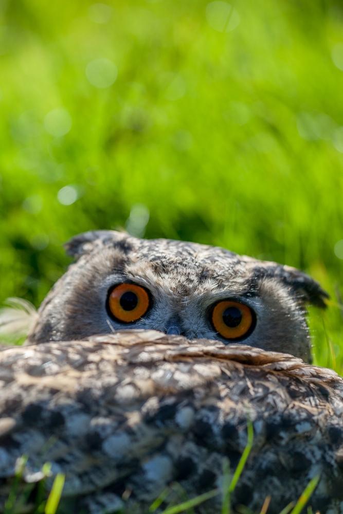Owl Shoots in September (2/4)