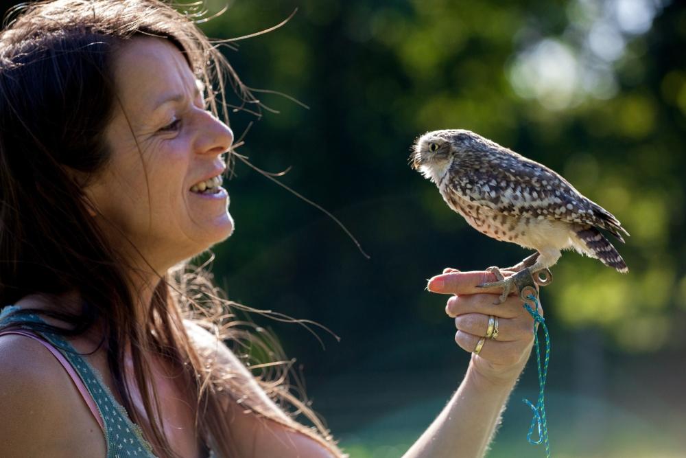 Owl Shoots in September (4/4)