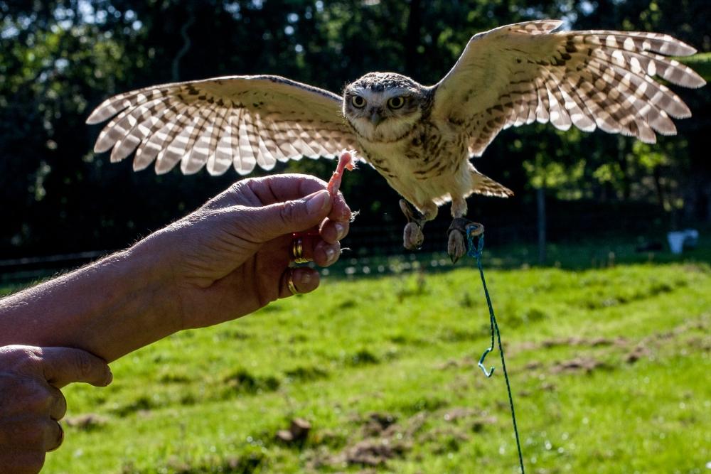 Owl Shoots in September (3/4)
