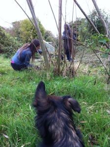 Cutting Willow