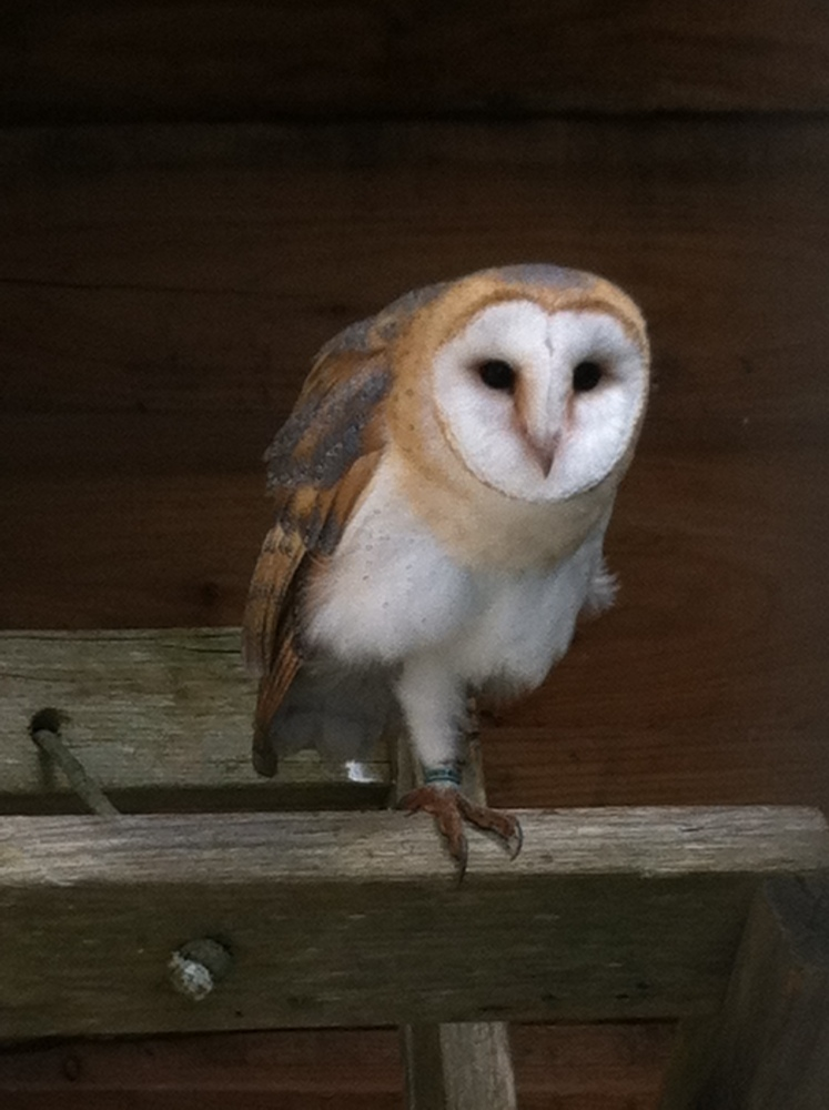 Owls by day (3/6)