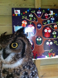 Owl advent