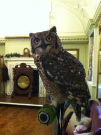 Victor at Fowey Hall
