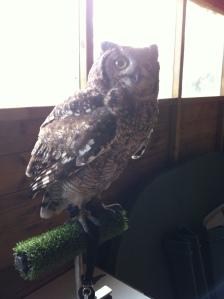 Owl scales