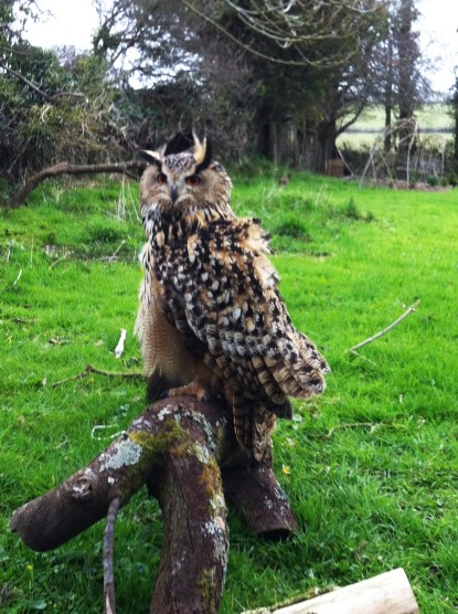 Eagle Owl who