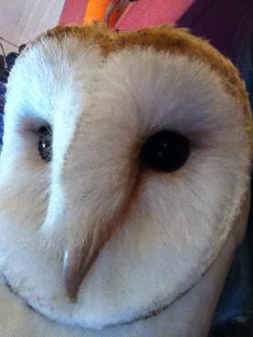 Barn Owl selfie