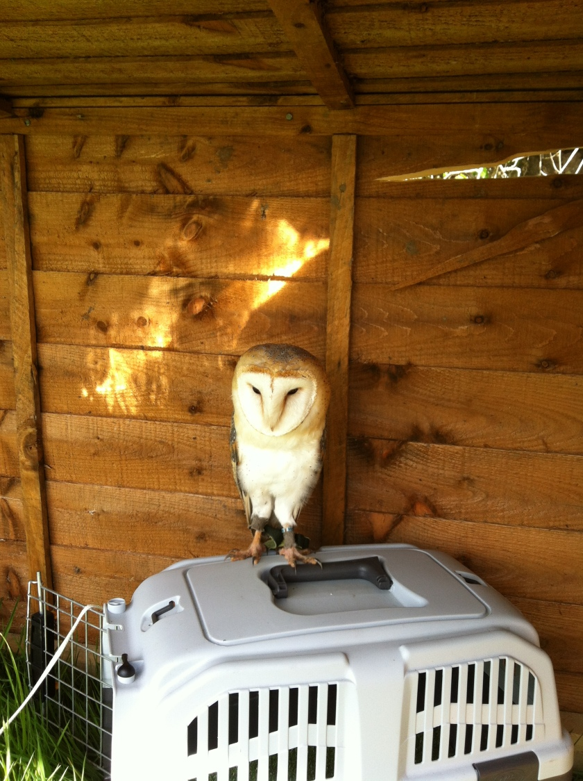 Barn Owl Whisper likes her travel box