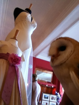 Whisper the Barn Owl at the Wedding Show