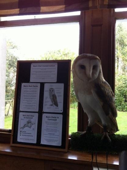 Barn Owl Conservation