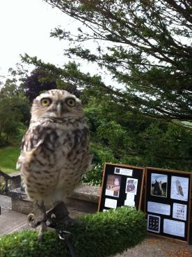 peanut-showing-off-his-big-eyes-at-trenython-manor-july-2016