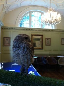 peanut-the-burrowing-owl-at-fowey-hall-hotel-june-2016