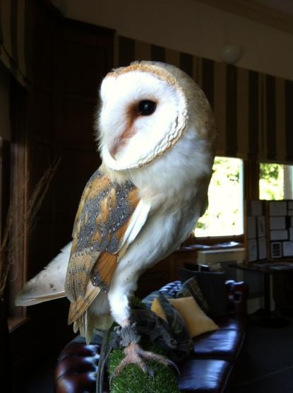 Whisper at Trenython Manor