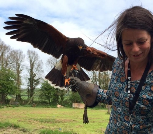 Harris Hawk fun
