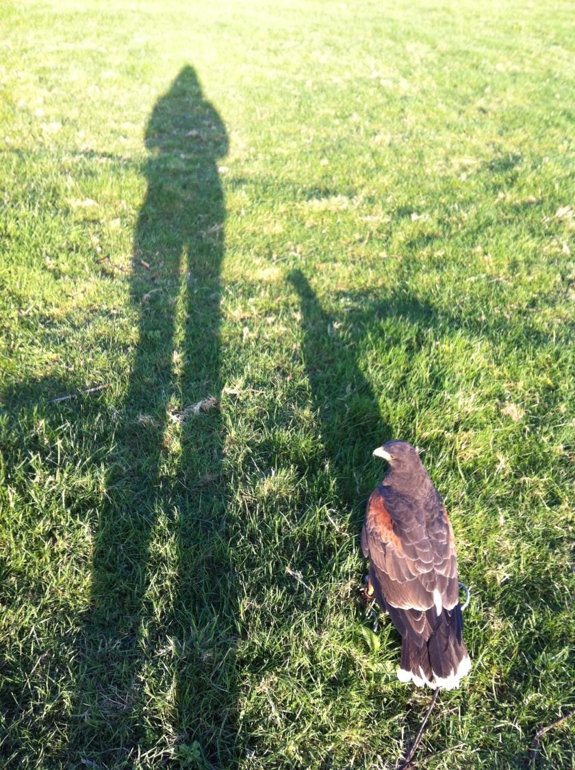 long-shadow-hawk