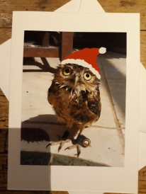 Peanut Burrowing Owl Cute Xmas Hat